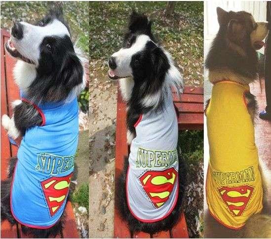 Big Dog Tee - Superman Sleeveless Dog Tshirt Photo