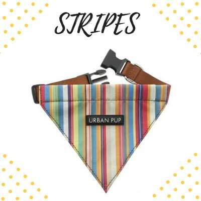 Bandana Collar - Stripes Photo