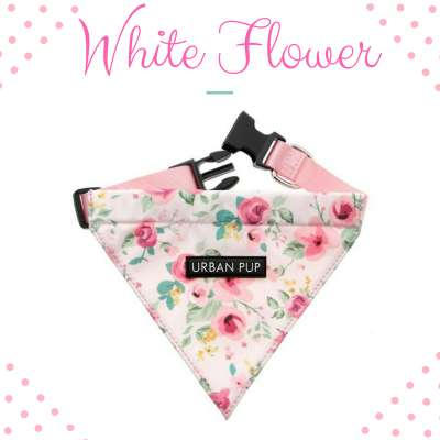 Bandana Collar - White Flower Photo