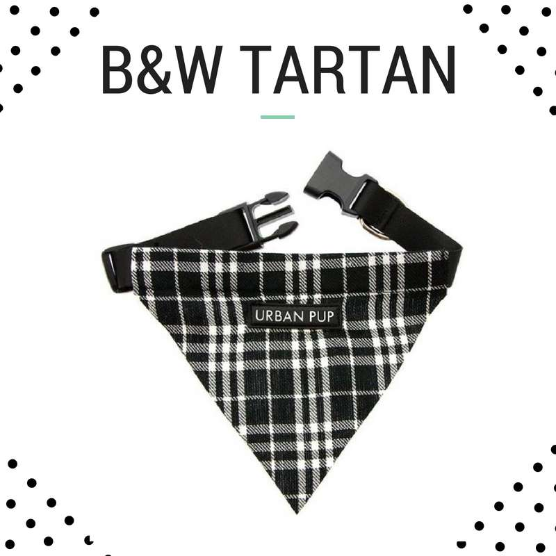 Bandana Collar - Black and White Tartan Photo