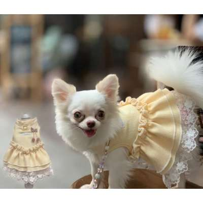 Glitter Pooch - VICTORIAN GIRL DOG & CAT HARNESS Photo